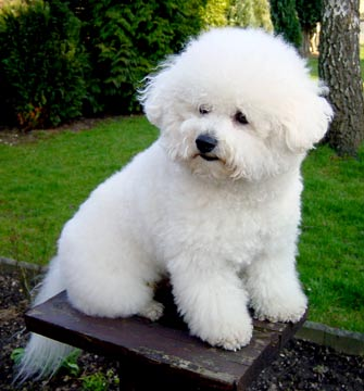 36++ Anjing rottweiler putih terupdate
